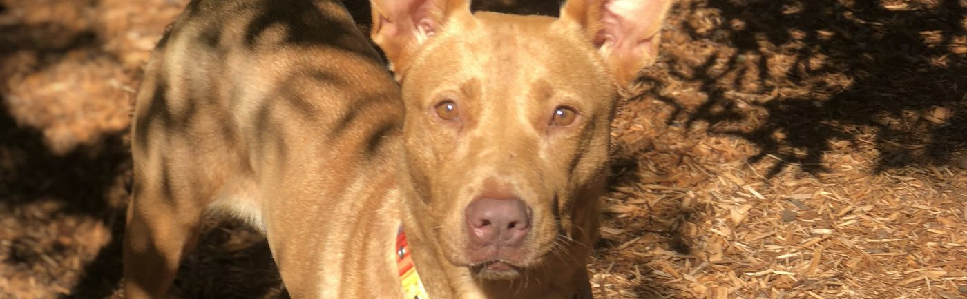 Humane Society of Forsyth County | Cumming, GA No Kill Dog